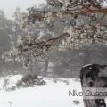 SLIDER 2019_04_Navacerrada2